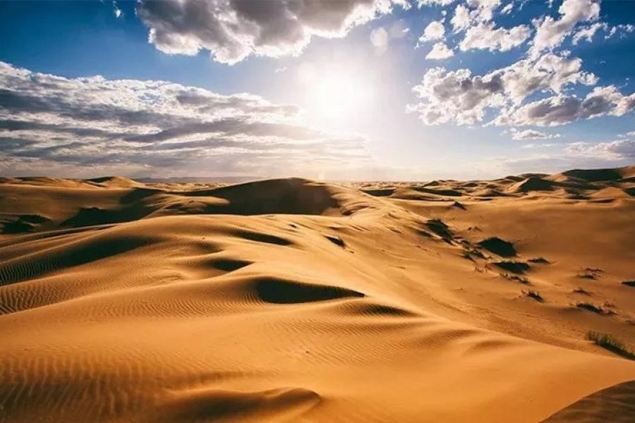 Create a Miracle in the Sahara Desert
